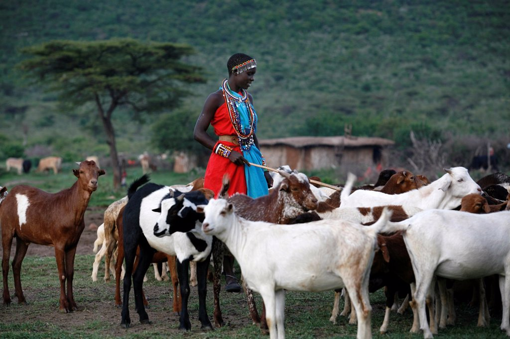 Stock Photo: 1566-1083522 Ngoiroro is a village of 200 inhabitants, all belonging to the Massai Tribe The village lays right in the rift valley, south of Nairobi against the tanzanian border The Massai live very close to nature and their animals The cows and goats are more importa