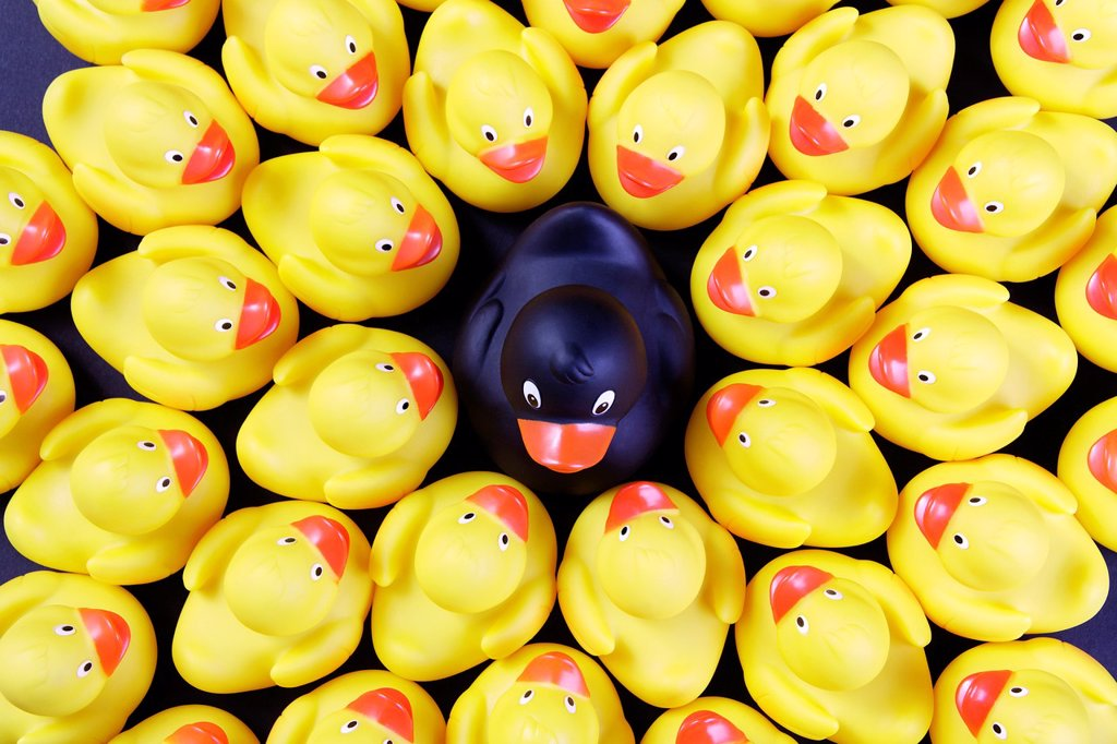 flock of rubber ducks - symbolism of leader or black duck of the family : Stock Photo