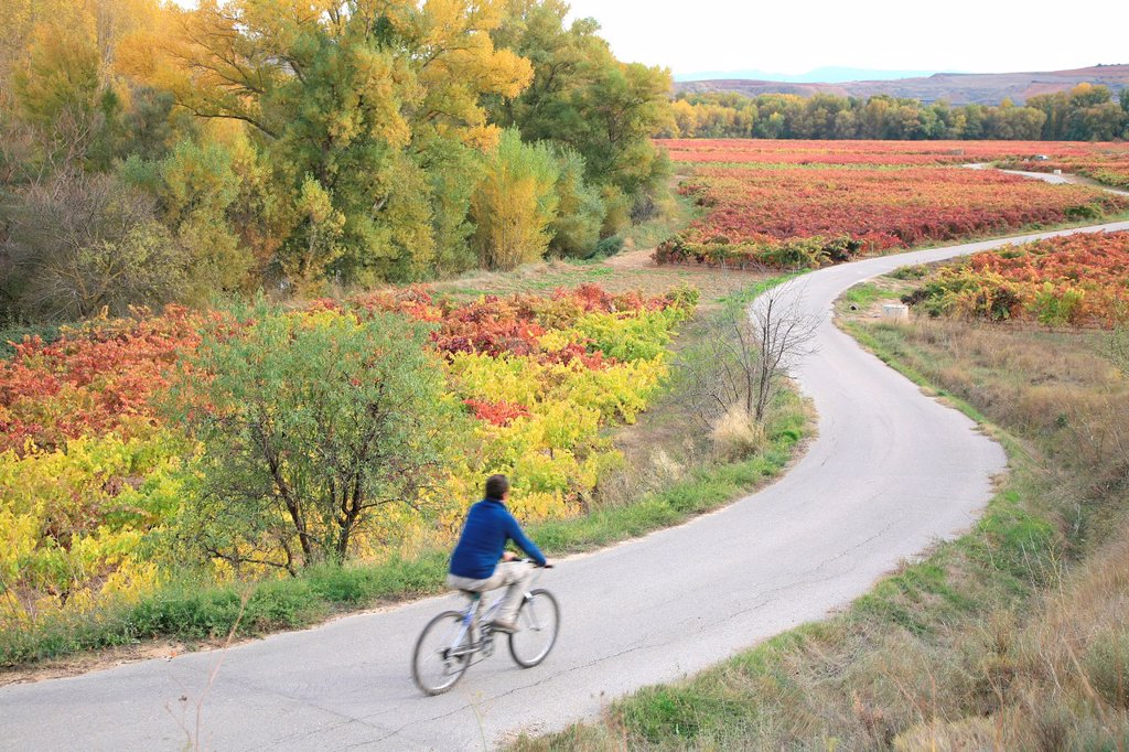 Stock Photo: 1566-1083761 Enjoying Rioja landscape, at autumn season, La Rioja, Spain, Europe