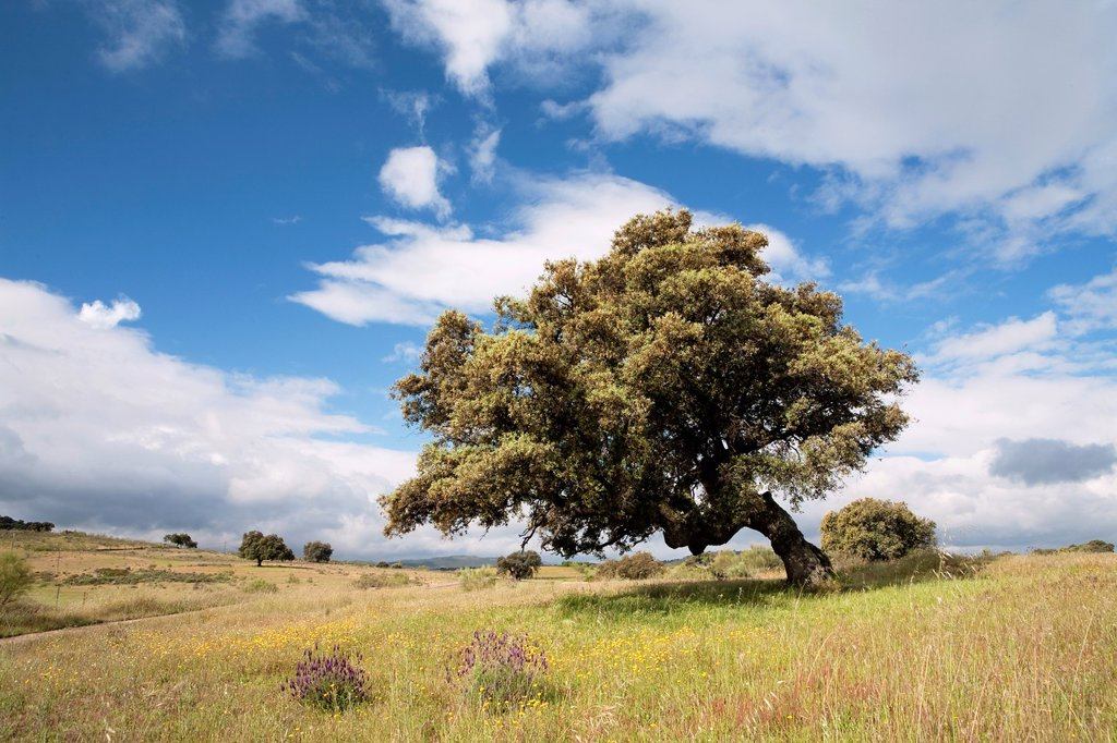 Stock Photo: 1566-1083811 Landscape in Bohonal de Ibor  Cáceres province  Extremadura  Spain