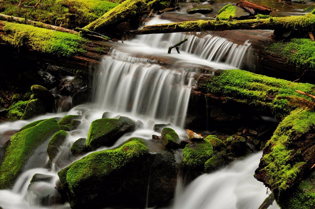 Waterfalls and mossy cascades in a stream along the trail to Sol Duc Falls, Olympic NP Sol Duc unit, Washington, USA : Stock Photo