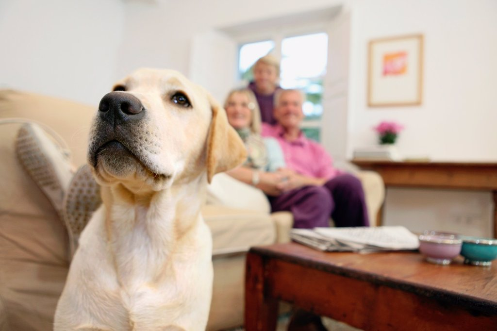 Stock Photo: 1566-1085826 Family and dog at home