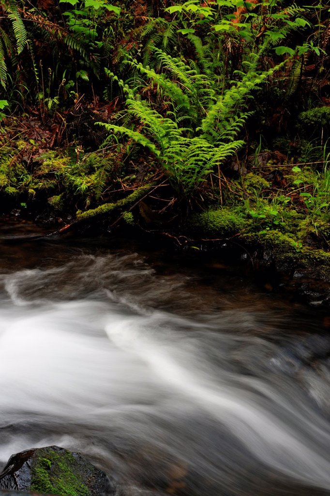 Stock Photo: 1566-1088057 Shepperd´s Dell creek above the waterfall , Columbia Gorge Nat Scenic Area, Orgeon, USA