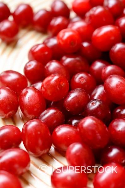 Stock Photo: 1566-1088173 Cornelian cherry Cornus mas