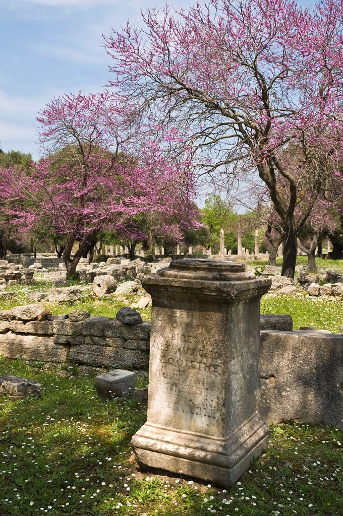 Stock Photo: 1566-1088557 Springtime with the judas trees in bloom at ancient Olympia, Peloponnese, Greece