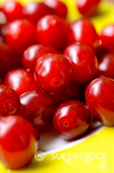 Stock Photo: 1566-1088977 Cornelian cherry Cornus mas