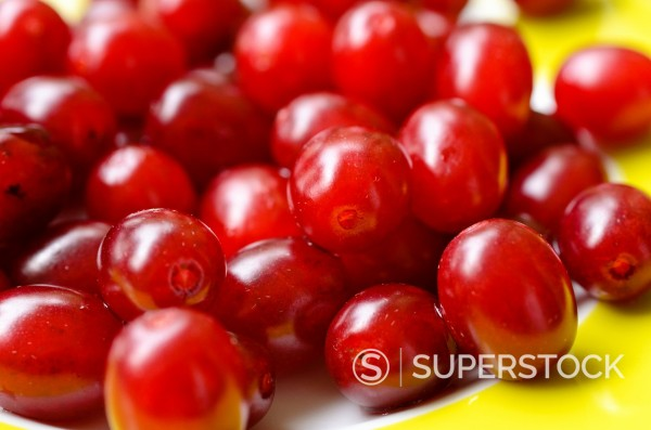 Stock Photo: 1566-1088978 Cornelian cherry Cornus mas