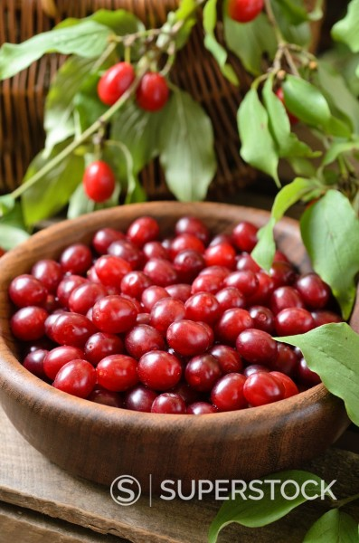 Cornelian cherry Cornus mas : Stock Photo