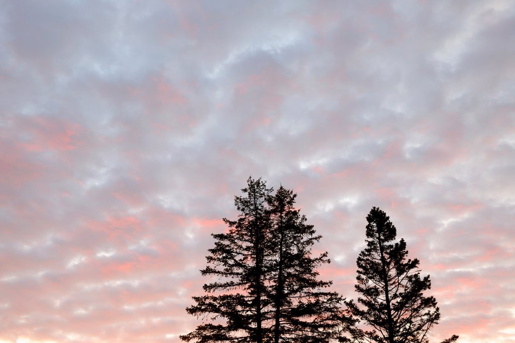 Clouds at dawn with tree silhouettes, Superior, Wisconsin, USA : Stock Photo
