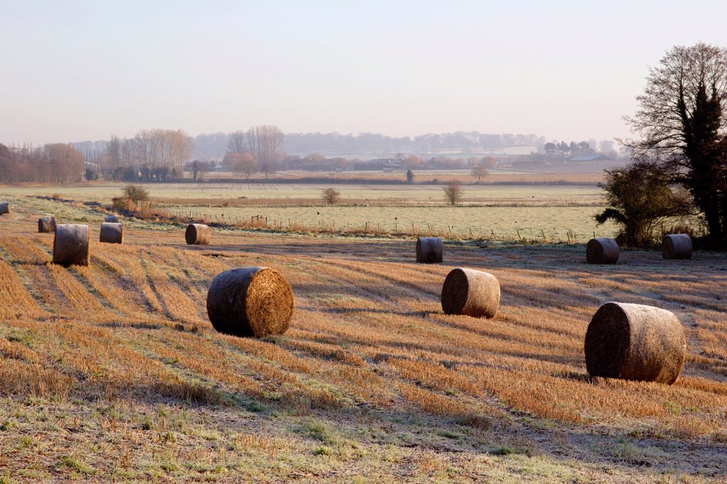 Stock Photo: 1566-1098957 Straw bales in field during winter, Near Newport, Shropshire, England, UK