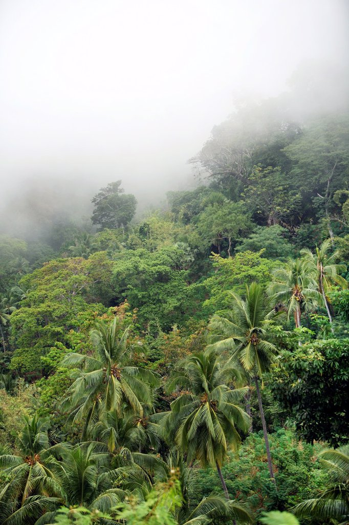 Stock Photo: 1566-1100315 Mountain forest on Atauro Island  East Timor