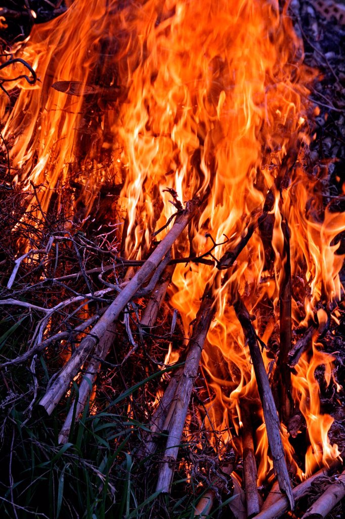 Stock Photo: 1566-1100844 cane burning, waste, Bages, Catalonia, Spain.
