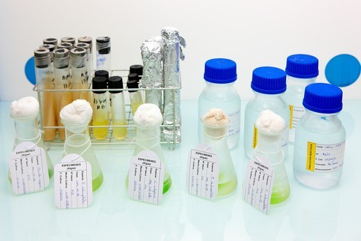 Stock Photo: 1566-1101836 Ecotoxicity and biocide test laboratory. Ecotoxicity and biocide test laboratory, Technology Research Center, Tecnalia Construction, CIDEMCO-Tecnalia Research & Innovation, development of new products and innovative solutions through research and innovation in different fields of activity as materials and sustainable chemistry, energy efficiency of buildings, rehabilitation and safety, Azpeitia, Gipuzkoa, Euskadi, Spain