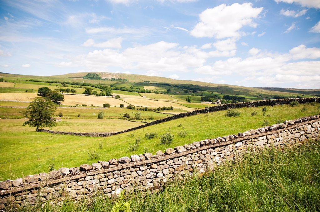 Stock Photo: 1566-1103268 View of agricultural field with stone wall, Wensleydale, Yorkshire-Dales region in North-England, Great Britain, Europe