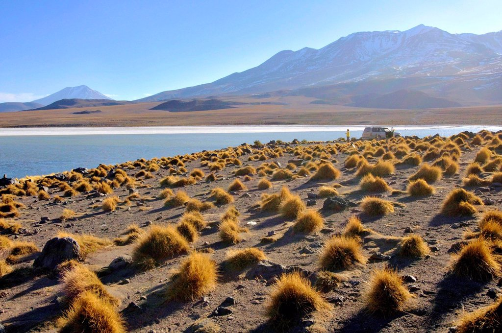 Stock Photo: 1566-1107480 Laguna Hedionda is a saline lake in the Nor Lípez Province, Potosí Department in Bolivia. It is notable for various migratory species of pink and white flamingos.