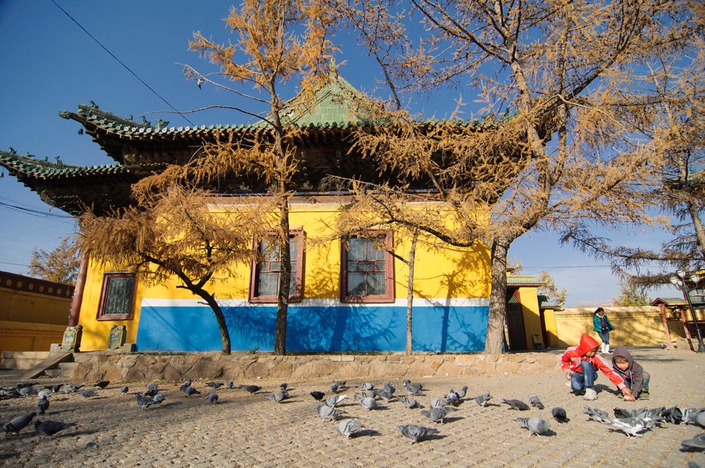 Stock Photo: 1566-1109109 pigeons at Gandan Monastery in Ulan Baatar, Mongolia