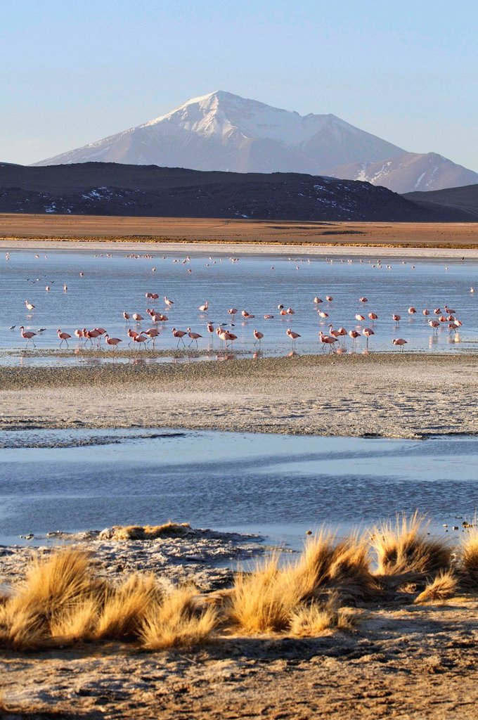 Stock Photo: 1566-1109543 Laguna Hedionda is a saline lake in the Nor Lípez Province, Potosí Department in Bolivia. It is notable for various migratory species of pink and white flamingos.