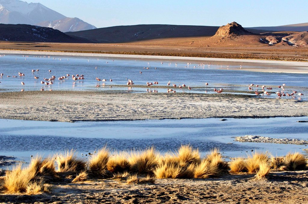 Stock Photo: 1566-1109544 Laguna Hedionda is a saline lake in the Nor Lípez Province, Potosí Department in Bolivia. It is notable for various migratory species of pink and white flamingos.