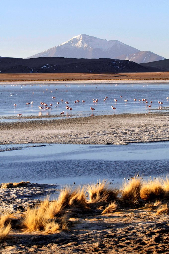 Stock Photo: 1566-1109545 Laguna Hedionda is a saline lake in the Nor Lípez Province, Potosí Department in Bolivia. It is notable for various migratory species of pink and white flamingos.