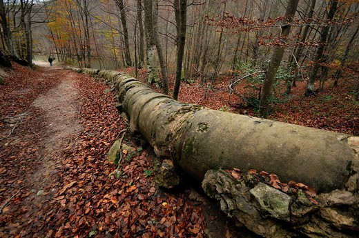 Old pipe in the forest, Montseny, Catalonia, Spain, Europe : Stock Photo