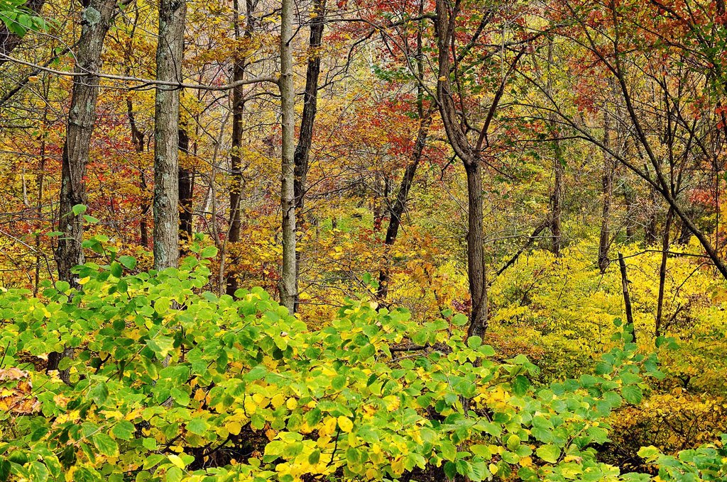 Autumn woods detail, Connecticut, CT : Stock Photo