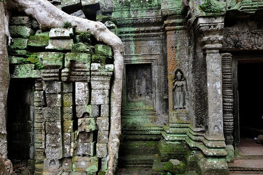Ta Prohm temple overtaken by trees, Angkor Wat, Siem Reap, Cambodia : Stock Photo