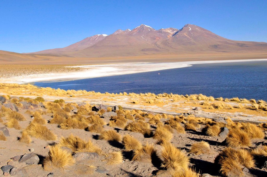 Stock Photo: 1566-1119758 Laguna Hedionda is a saline lake in the Nor Lípez Province, Potosí Department in Bolivia. It is notable for various migratory species of pink and white flamingos.