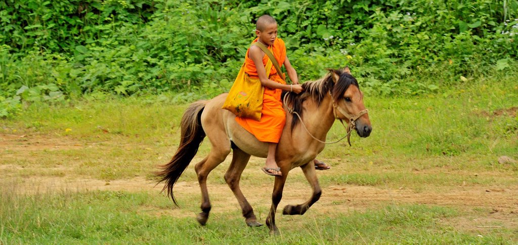 Novice and the horse on relaxation time, Wat Tam Pa Ar-Cha Thong, Maechan, Chiangrai, North of Thailand. : Stock Photo