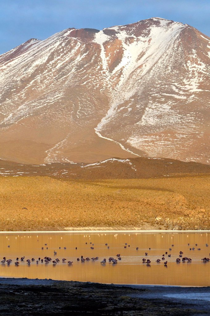 Stock Photo: 1566-1121241 Laguna Hedionda is a saline lake in the Nor Lípez Province, Potosí Department in Bolivia. It is notable for various migratory species of pink and white flamingos.