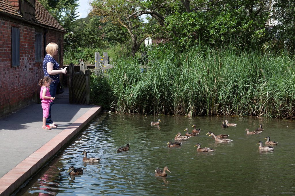 Mother and child feeding ducks from footpath : Stock Photo