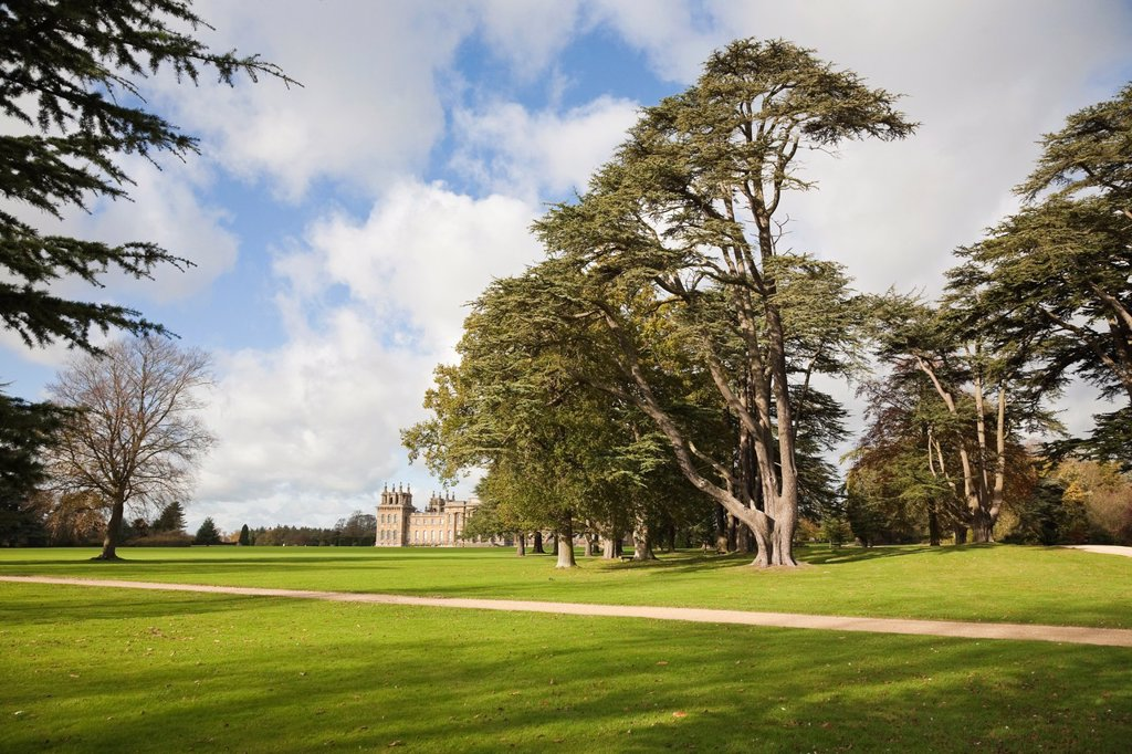 Stock Photo: 1566-1125515 Blenheim Palace parkland, Woodstock, Oxfordshire, England, UK