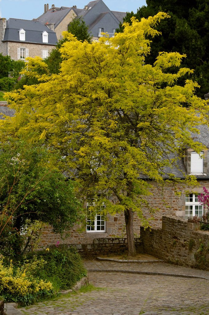 Stock Photo: 1566-1129597 Typical stone breton houses and gardens, Old town, Dinan, Brittany, Cotes d´Armor, France