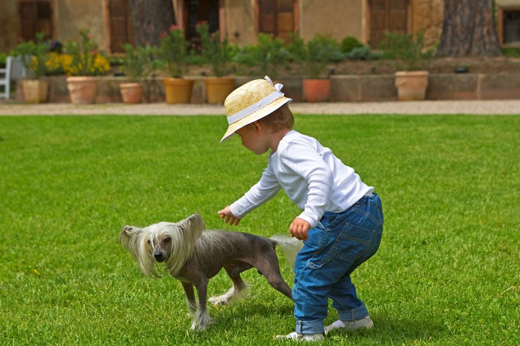 France , Bas-Rhin , Thanville , Chinese Crested Dog Canis lupus familiaris  with a child  girl : Stock Photo