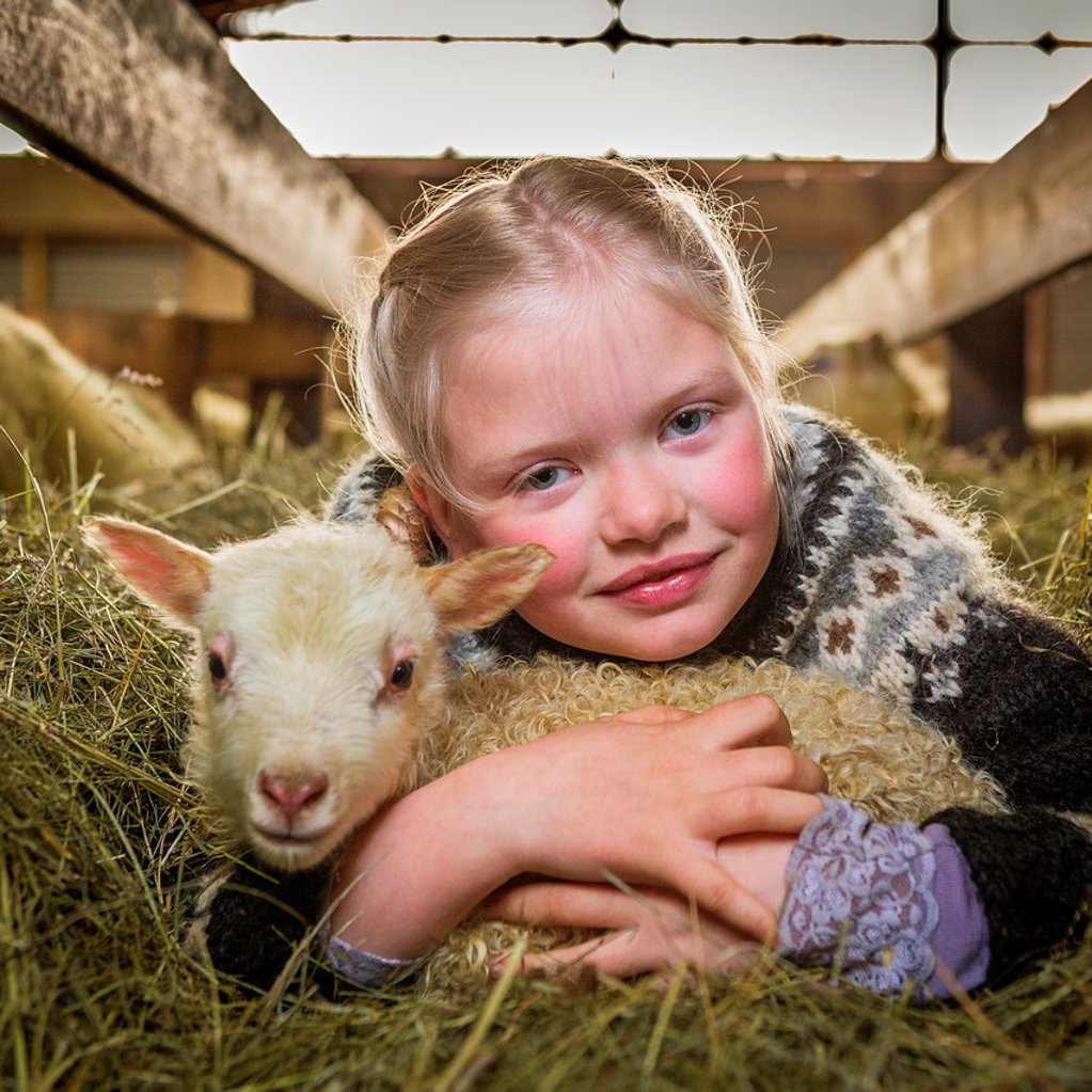 Girl with young lamb, Western Iceland : Stock Photo