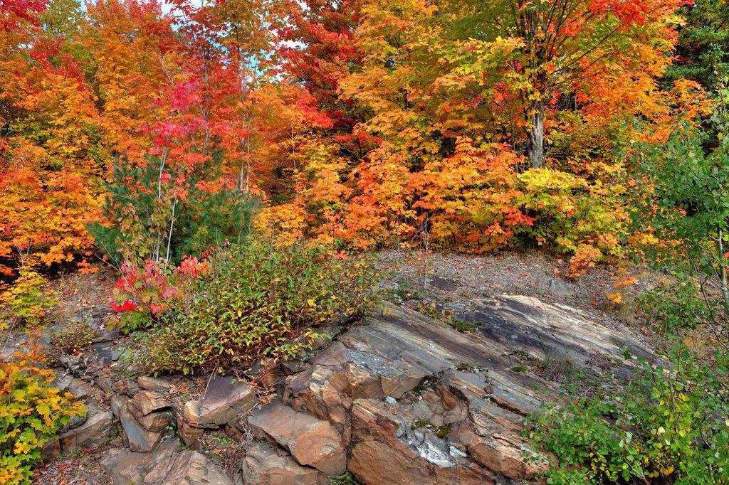 Autumn Colours in Algonquin Provincial Park, Ontario, Canada : Stock Photo