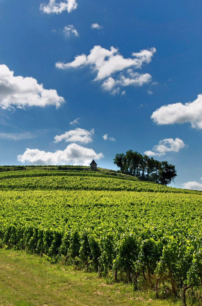 Stock Photo: 1566-1137740 Vineyard of Saint-Émilion, Gironde, Aquitaine, France, Europe