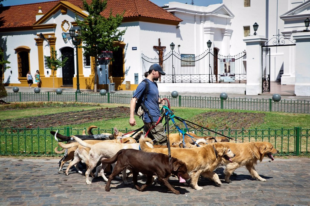 Stock Photo: 1566-1138949 Dog Walker, Buenos Aires, Argentina