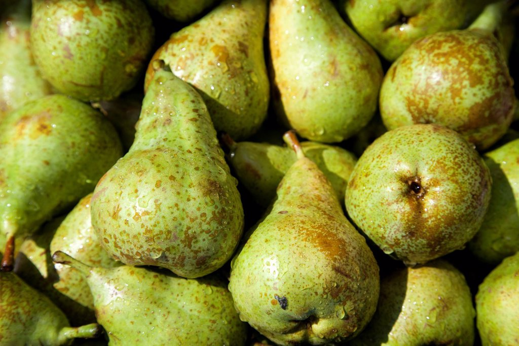 Pears - Conference Variety : Stock Photo