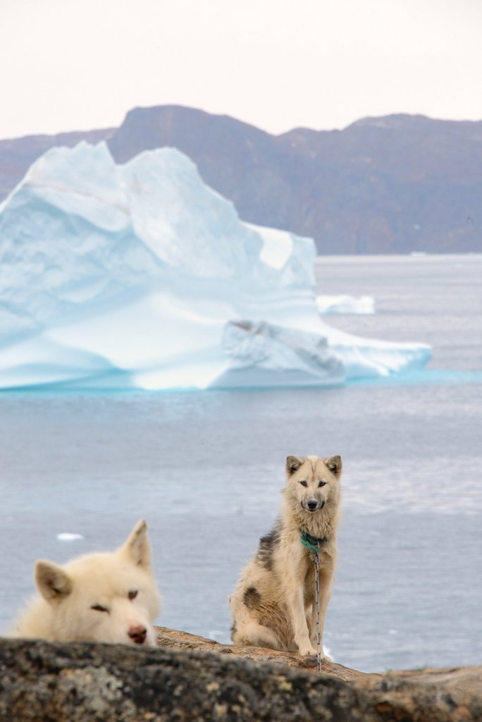 Stock Photo: 1566-1150952 Greenland, Baffin Bay, Nutaarmiut, Greenland dogs