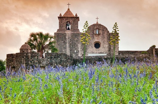 Skullcap wildflowers at meadow below Our Lady of Loreto Chapel at Presidio La Bahia, a fort near Goliad State Park, Texas, USA : Stock Photo