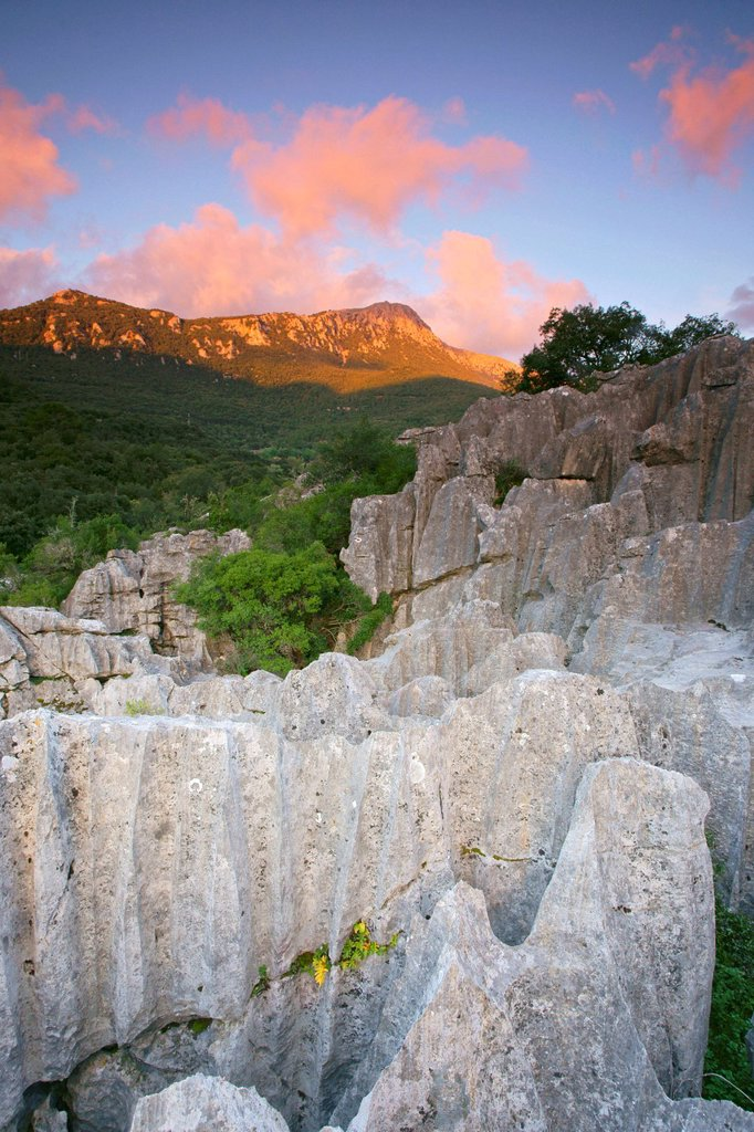 Karstic rocks Escorca Sierra de Tramuntana LLuc Mallorca Balearic Islands Spain : Stock Photo