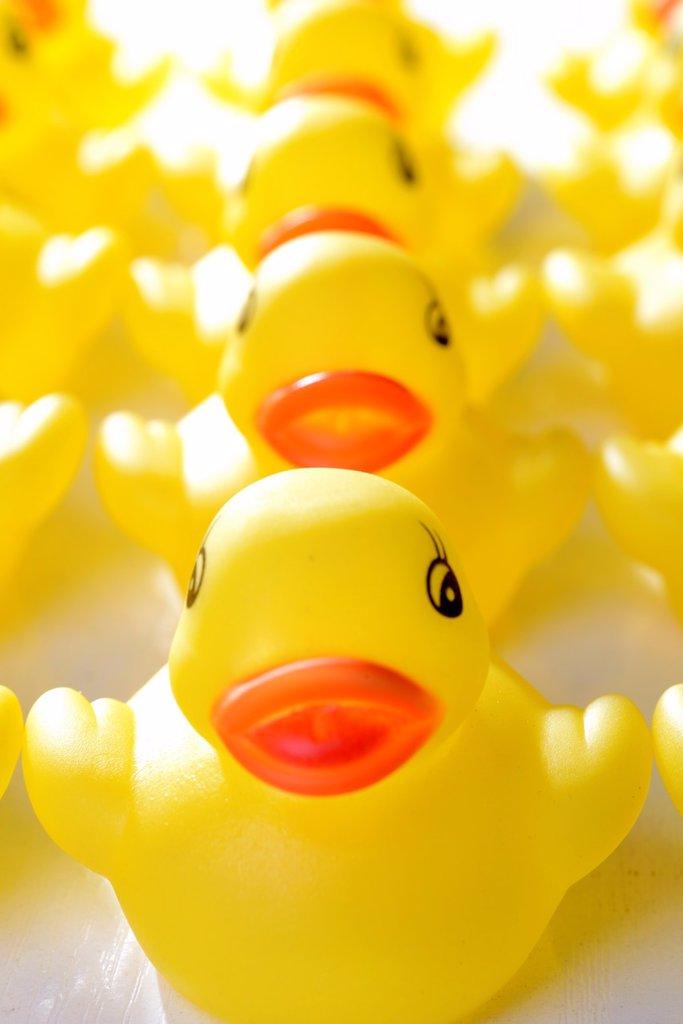 yellow-billed ducks : Stock Photo