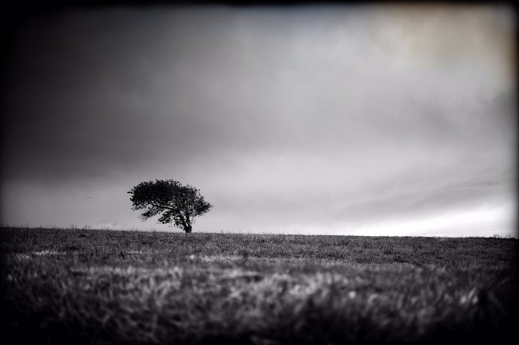 Stock Photo: 1566-1158981 Arbol solitario en medio de campo , Lone tree in the middle of field