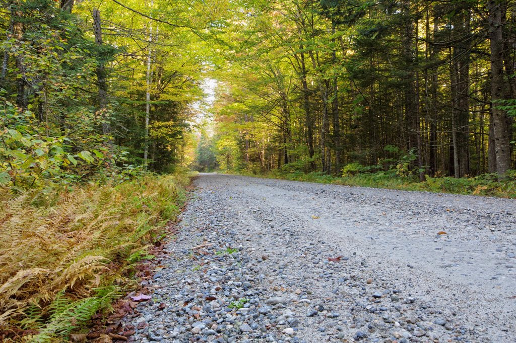 Gale River Forest - Autumn foliage along the Gale River Road in the White Mountain, New Hampshire USA : Stock Photo