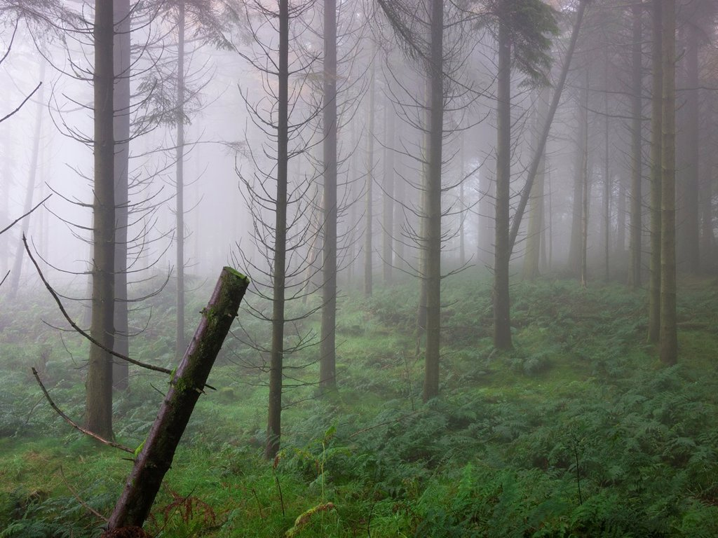 Misty scene in a forest at autumn time  Stockhill Forest, Mendip Hills, Somerset, England : Stock Photo