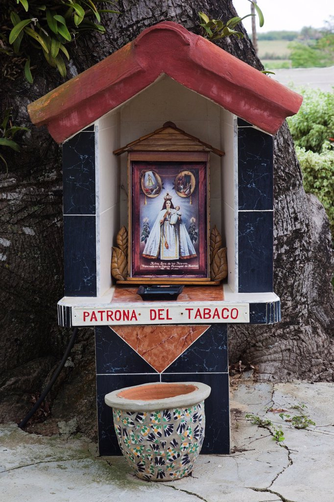 Stock Photo: 1566-1164894 Cuba, Pinar del Rio Province, San Luis, Alejandro Robaina Tobacco Plantation, shrine to Our Lady of Tobacco