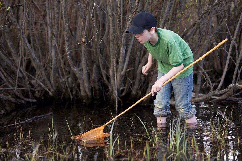 Stock Photo: 1566-1165505 Young boy hunting frogs in the swampy lake