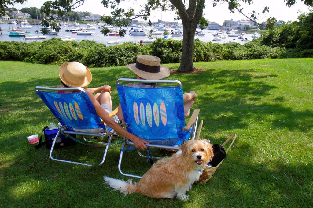 Stock Photo: 1566-1165615 Massachusetts, Cape Cod, Harwich, Wychmere Harbor, harbour, park, boats, tree, woman, lawnchair, dog, pet,