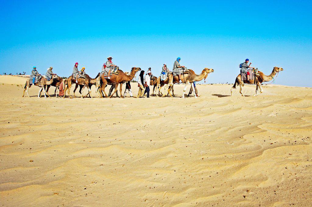 Tourists riding camels  Sahara Desert, Douz, Tunisia. : Stock Photo