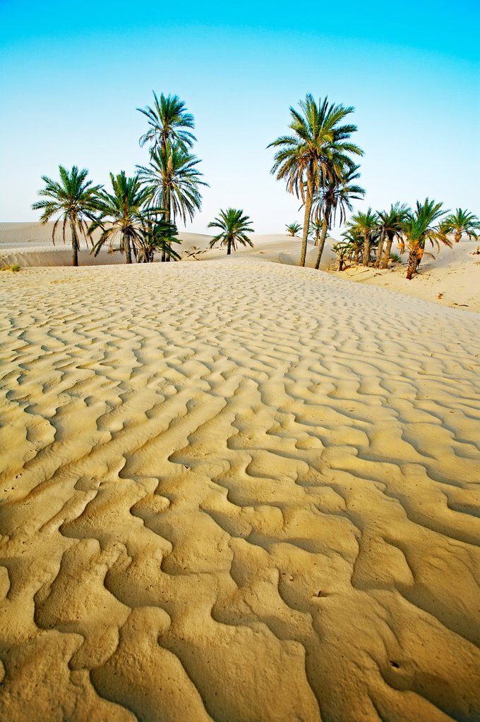 Stock Photo: 1566-1167867 Sand dunes  Sahara Desert, Douz, Tunisia.